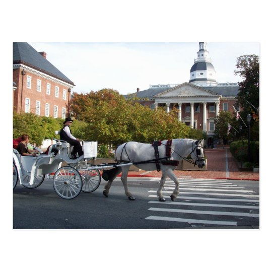 Annapolis Horse and Carriage Ride Postcard