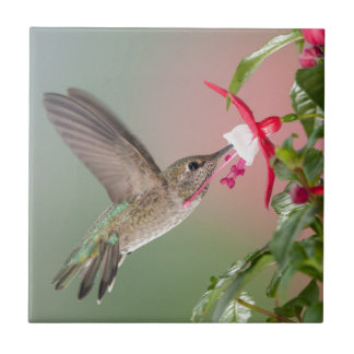 Anna's Hummingbird and Fuschia Tile