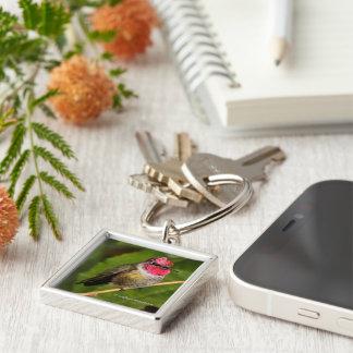 Anna's Hummingbird and His Raspberry-Dipped Head Key Ring