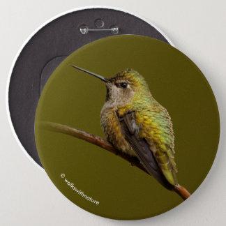 Anna's Hummingbird on the Scarlet Trumpetvine 6 Cm Round Badge