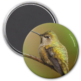 Anna's Hummingbird on the Scarlet Trumpetvine Magnet