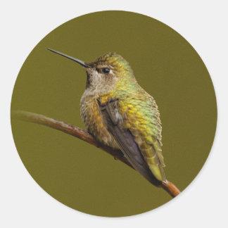 Anna's Hummingbird on the Scarlet Trumpetvine Round Sticker