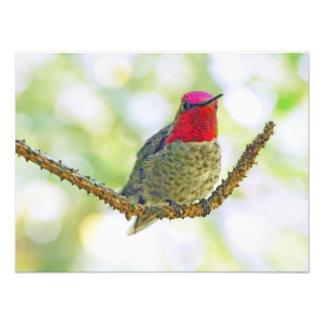 Anna's Hummingbird Photographic Print