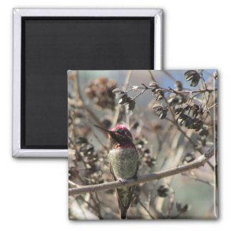 Anna's Hummingbird Photo Magnet