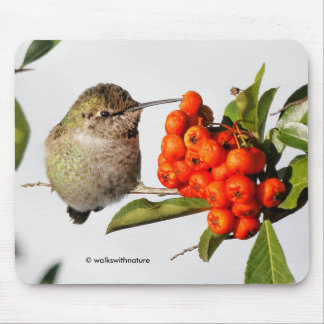Anna's Hummingbird Poses with the Pyracantha Mouse Mat