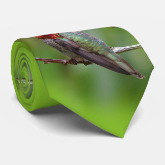 Anna's Hummingbird: This King Wears a Pink Crown Tie