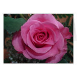 Anniversary of a Death Pink Rose series1 Cards