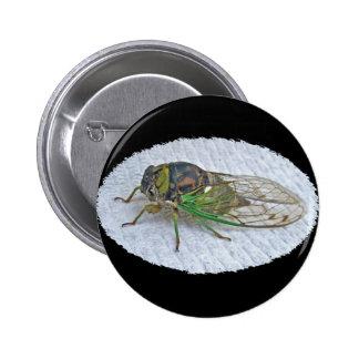 Annual Cicada Coordinating Items 6 Cm Round Badge