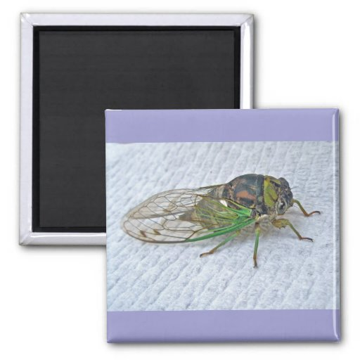 Annual Cicada Coordinating Items Refrigerator Magnets