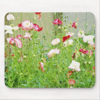 Annual Poppies flowers Mouse Pad