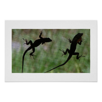 Anole Dual Poster
