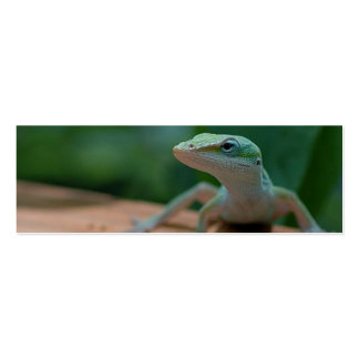 anole profile card or bookmark pack of skinny business cards