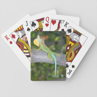 Anolis lividus playing cards