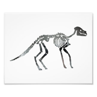 anoplotherium skeleton photo