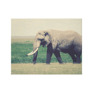 Another Marching Elephant Gallery Wrap Canvas