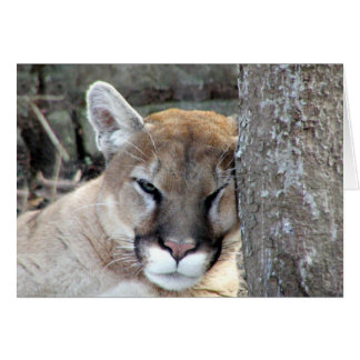 Another monday cougar greeting cards