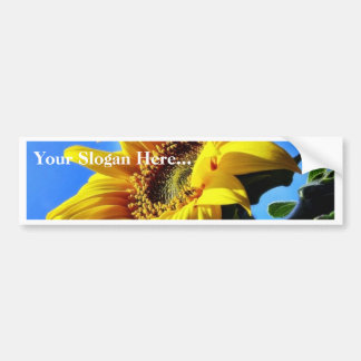 Another Of The Sunflowers On My Balcony Bumper Sticker