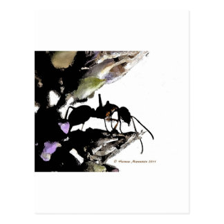 ant   a postcard