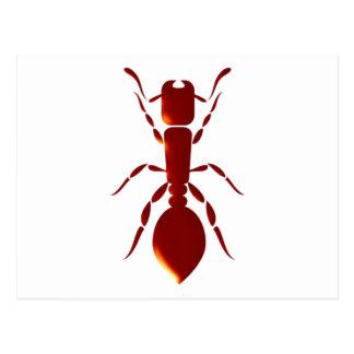 Ant ant postcards