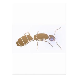 Ant ant postcard