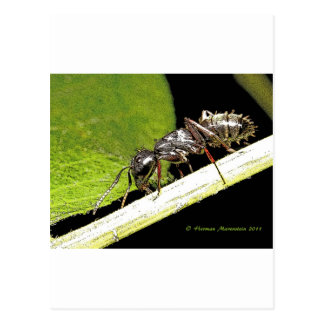 ant b post cards