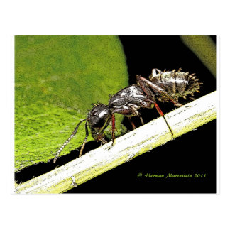 ant b postcard