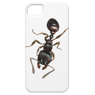 Ant  Case-Mate Barely There iPhone 5/5S Case