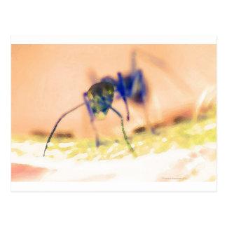 ant d postcard