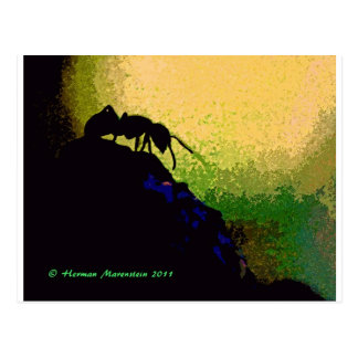ant e post cards