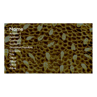 Ant - forehead business cards