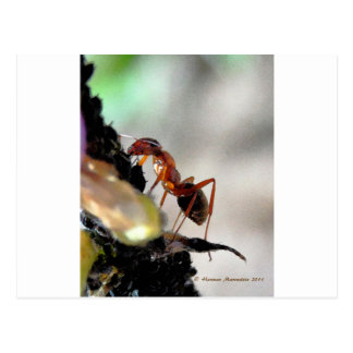ant g postcards