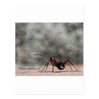 ant h postcard