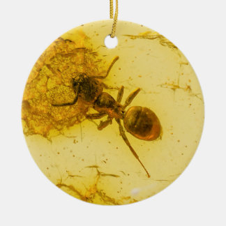 Ant inside amber christmas ornament