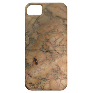 Ant on Rock iPhone5 Case Barely There iPhone 5 Case
