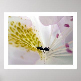Ant on white #2 poster