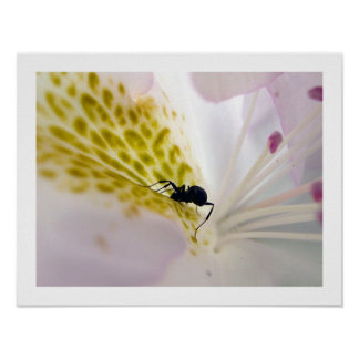 Ant on white #4 poster