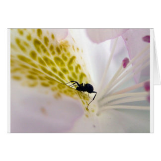 Ant on white card