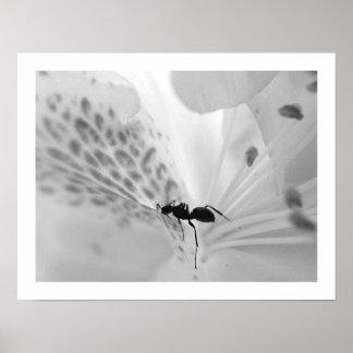Ant on White Poster