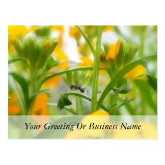 Ant Portrait With Siberian Wallflowers Postcard