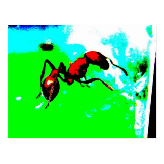 ant post card
