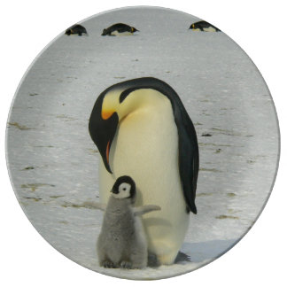 Antarctic Penguins Chick Snow Beach Birds Ocean Porcelain Plates