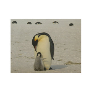 Antarctic Penguins Chick Snow Beach Birds Ocean Wood Poster