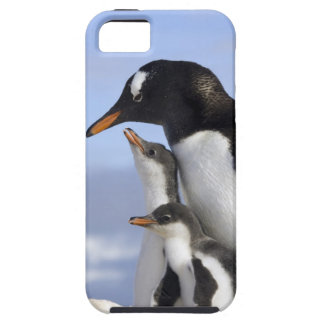 Antarctic Peninsula, Neko Harbour, Gentoo Case For The iPhone 5