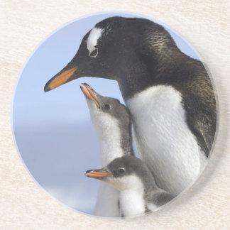 Antarctic Peninsula, Neko Harbour, Gentoo Coaster