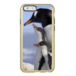 Antarctic Peninsula, Neko Harbour, Gentoo Incipio Feather® Shine iPhone 6 Case