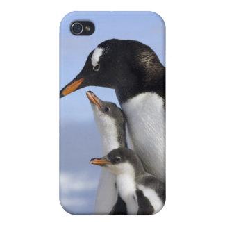Antarctic Peninsula, Neko Harbour, Gentoo iPhone 4/4S Cover