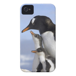 Antarctic Peninsula, Neko Harbour, Gentoo iPhone 4 Case-Mate Case
