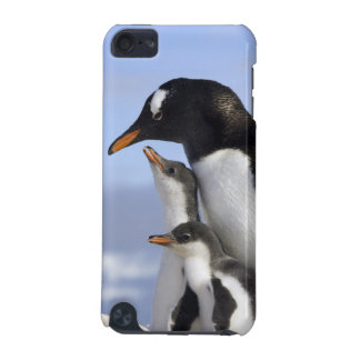 Antarctic Peninsula, Neko Harbour, Gentoo iPod Touch 5G Cases