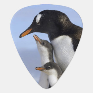 Antarctic Peninsula, Neko Harbour, Gentoo Plectrum