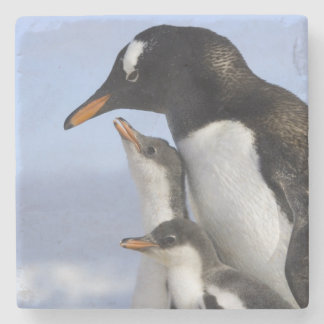 Antarctic Peninsula, Neko Harbour, Gentoo Stone Coaster